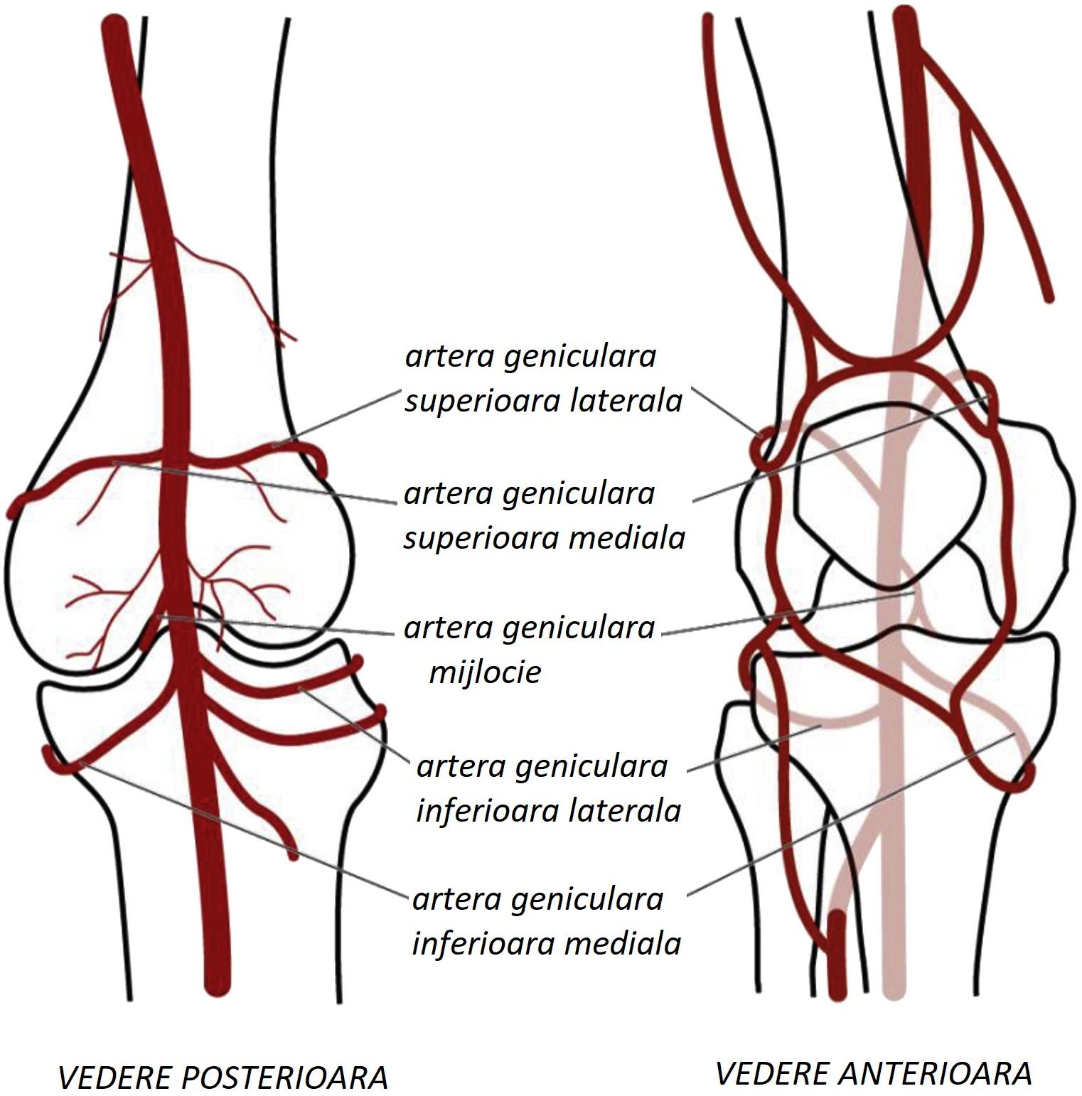 artere psoriazice sinovita genunchiului