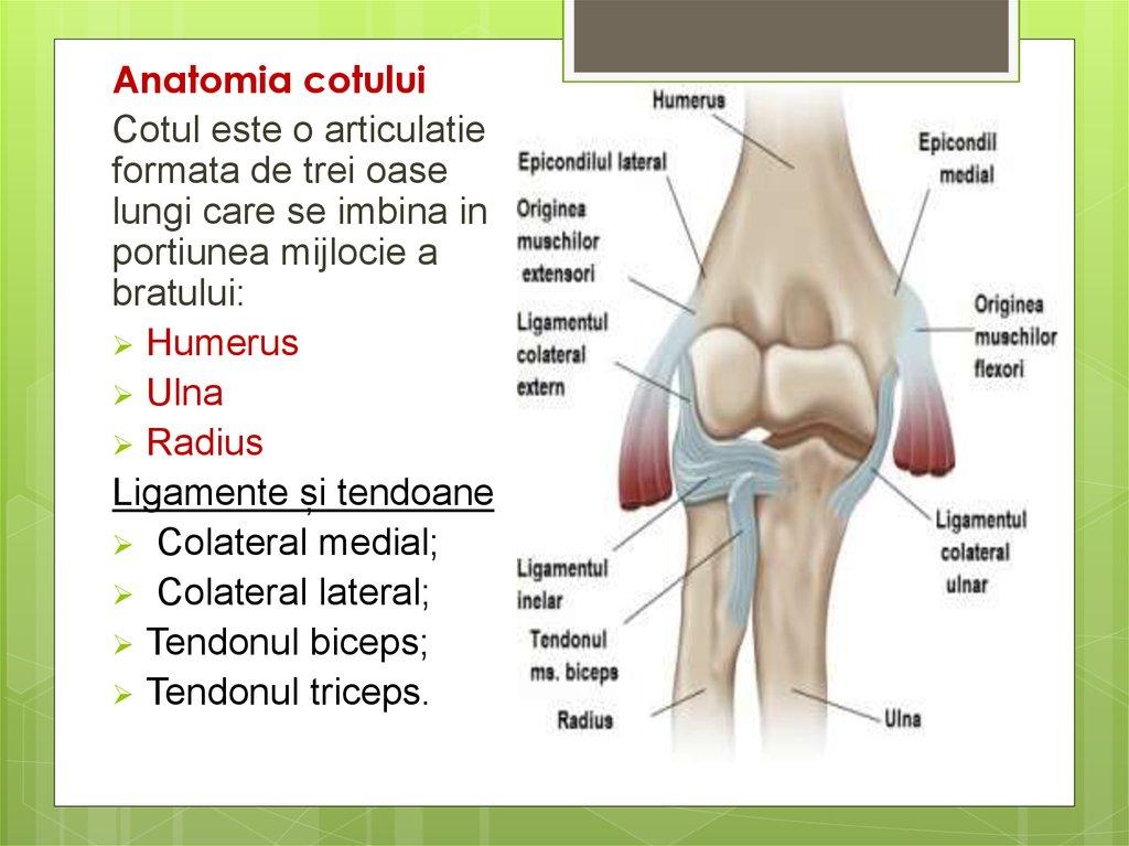 durere la nivelul articulației umărului și cotului tratarea artrozei articulației șoldului
