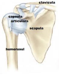 mă doare articulația umărului tratamentul articulației narciselor