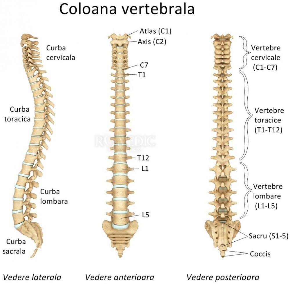 boli ale oaselor articulare și ale coloanei vertebrale