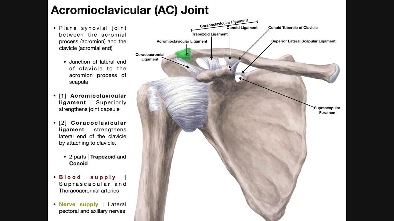 articulațiile acromioclaviculare ungerea unguentului articulației genunchiului