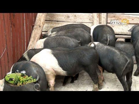 artroza în tratamentul porcilor Tratamentul cu noroi Saki pentru artroză