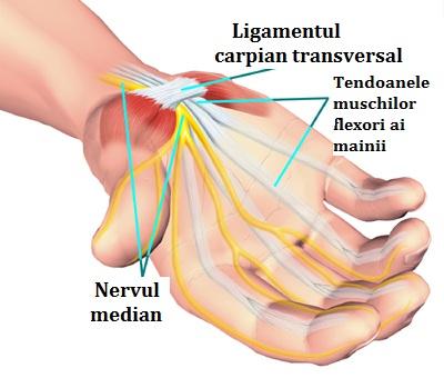 rătăcind dureri articulare noaptea tratamentul artrozei posterioare