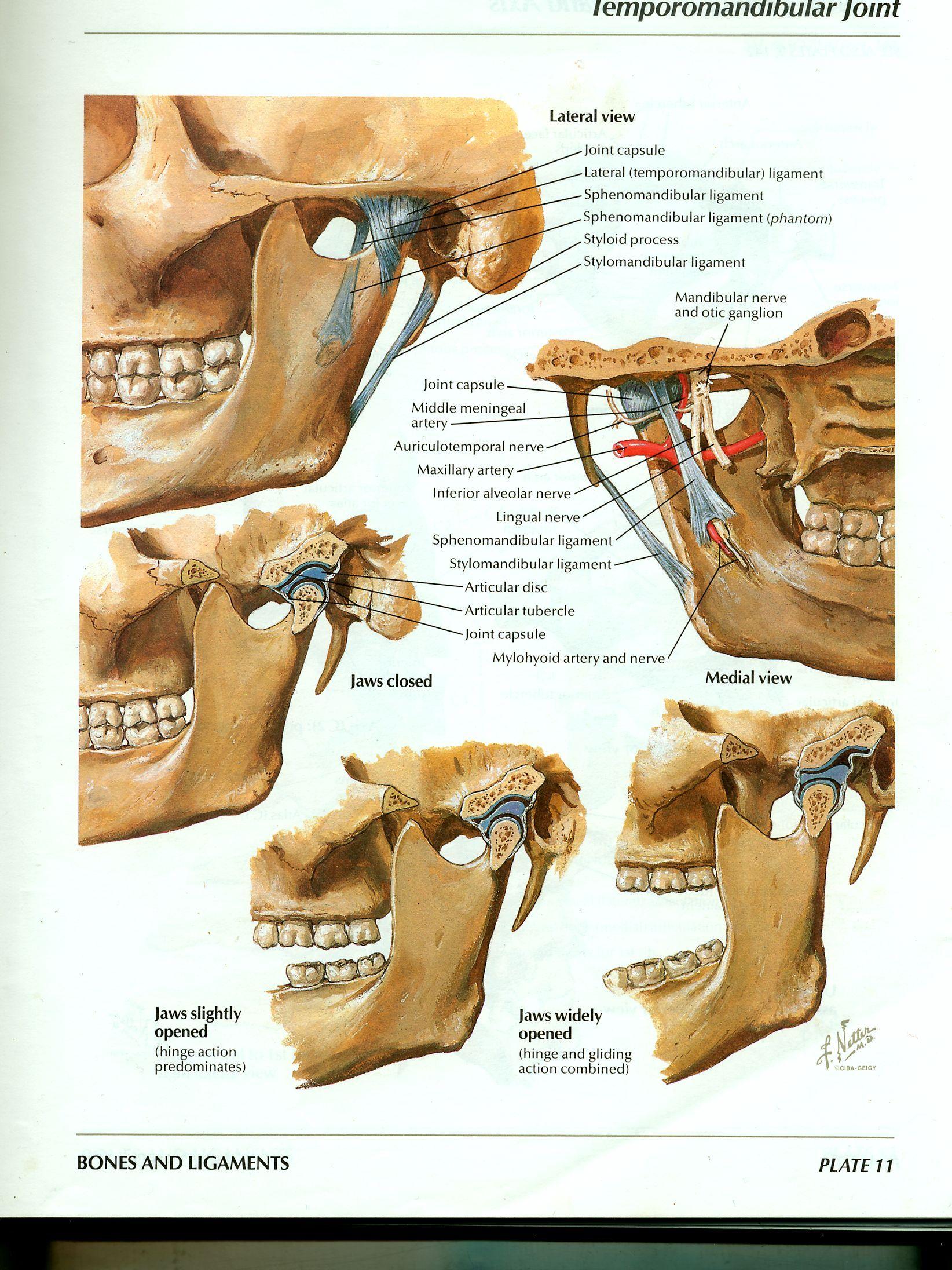 artroza articulației temporale