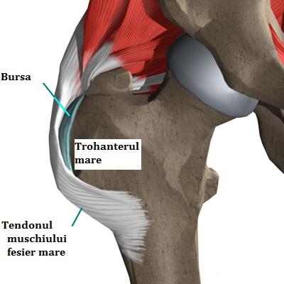 bursita durerii de șold oris tratamentul spatelui și articulațiilor