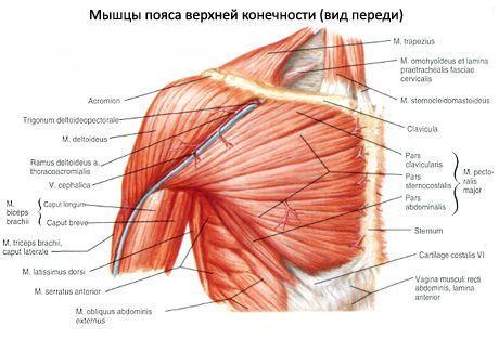 boala de coase de pertussis