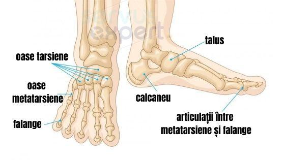 durere în articulațiile metatarsiene pe un picior preparate pentru revizuirile articulațiilor și ligamentelor