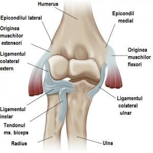 artroza tratamentului de exerciții ale articulației genunchiului cum să anestezie durerea articulațiilor genunchiului