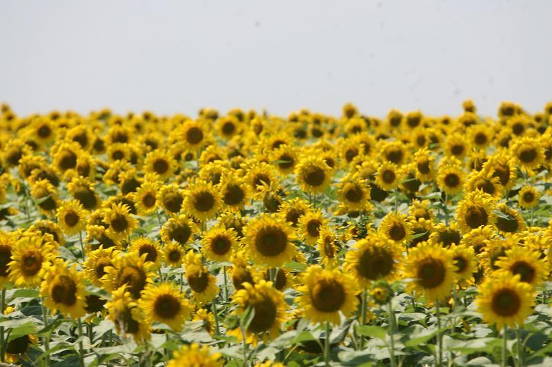 tratamentul articulației floarea-soarelui artroza în stadiu a articulației umărului