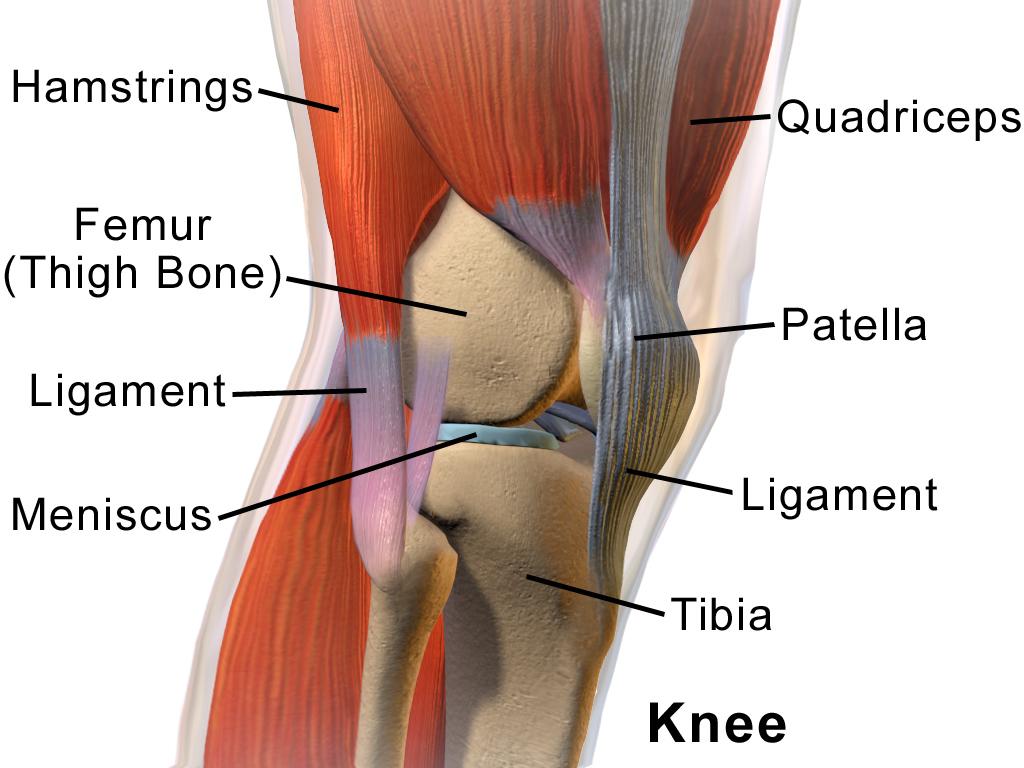 pentru articulația genunchiului dureri articulare iliace
