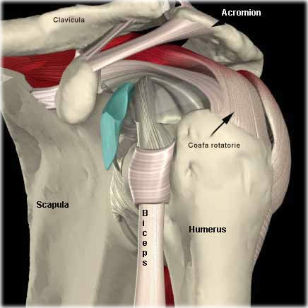 după exercițiu  durere în articulația umărului gel pentru hașa minune articulară