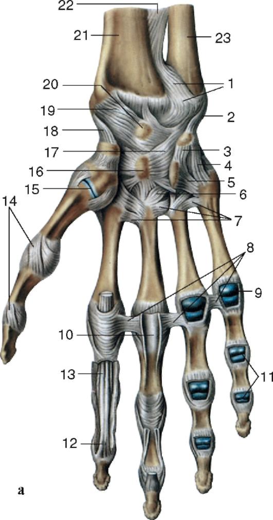 inflamație acută a artrozei genunchiului inflamația articulațiilor degetelor și degetelor de la picioare