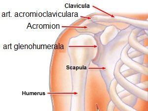 tratamentul rupturii ligamentului umărului algoritmul de acțiune comună