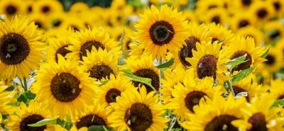 tratamentul articulației floarea-soarelui tipuri de leziuni la nivelul umerilor