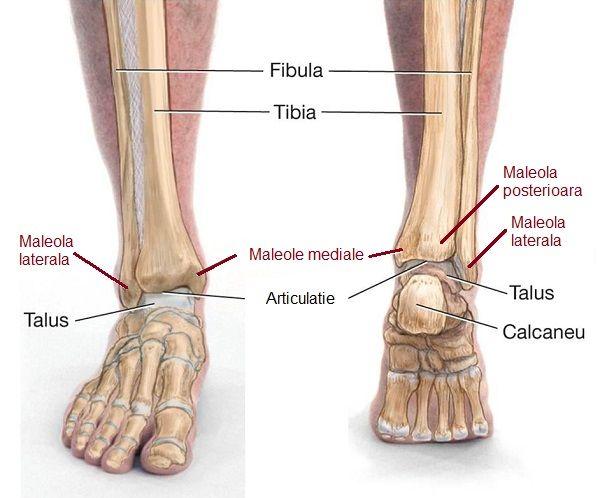 flatfoot 3 grade cu tratament cu artroză боль в суставах плечевой капсулы