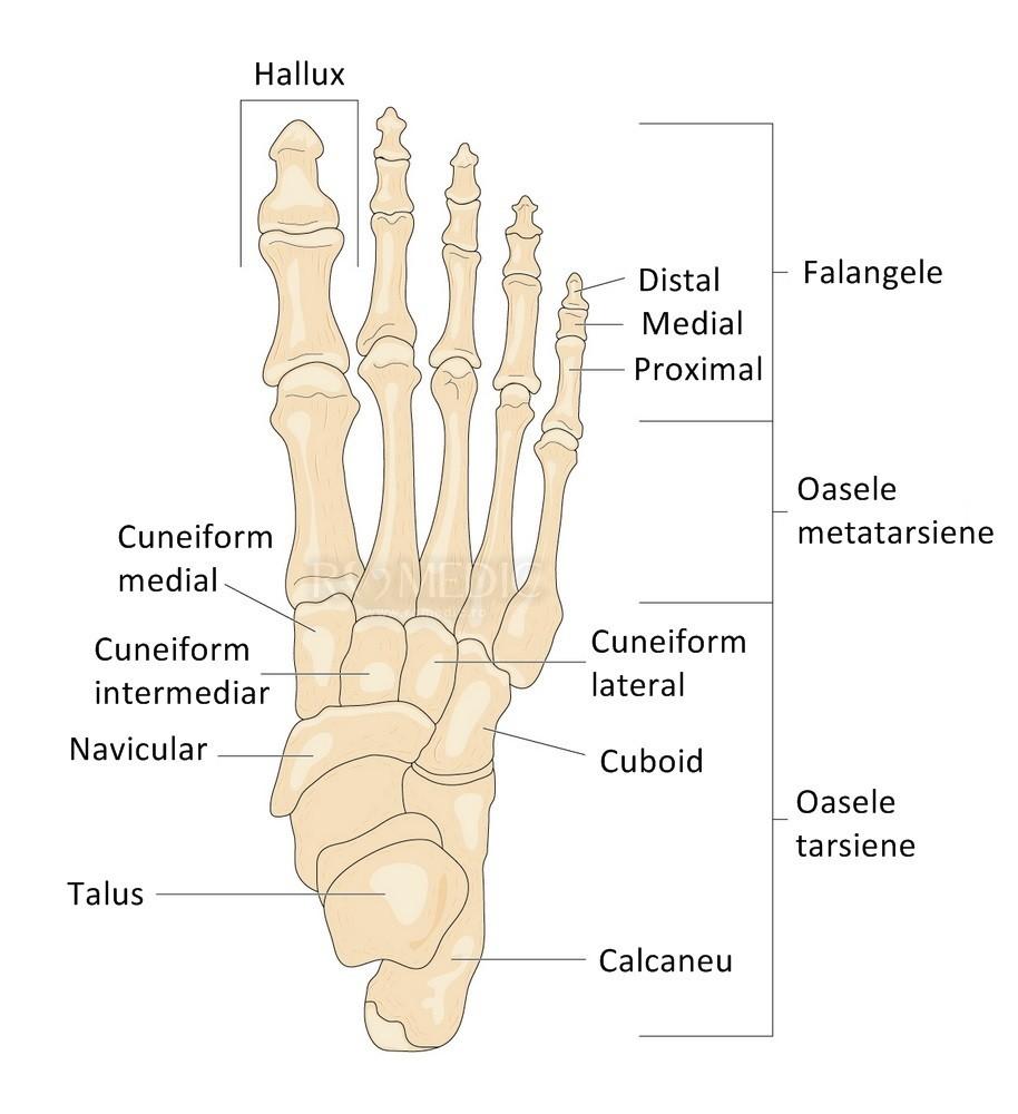 durere în articulațiile metatarsiene pe un picior ultraton pentru tratamentul artrozei