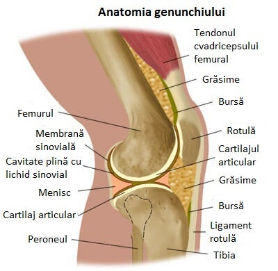 durere în oasele genunchiului tratament cu artroză ohmică