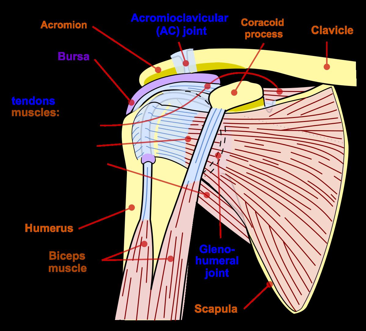 articulația umărului întors cum să tratezi dureri de cusături în articulația gleznei