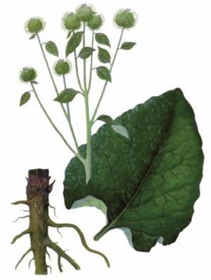 plante medicinale care tratează artroza