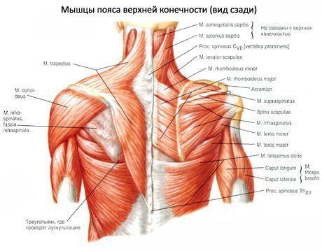 deteriorarea mușchiului de rotație a articulației umărului tratamentul coapselor cotului