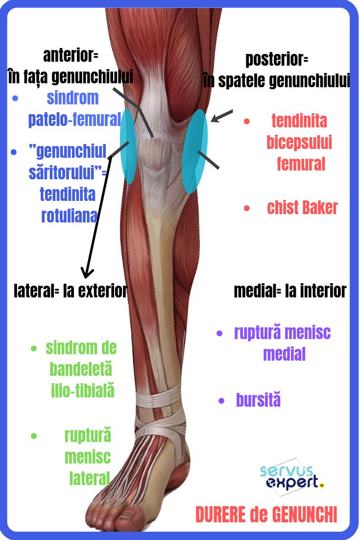 dureri osoase în articulația genunchiului edem articular