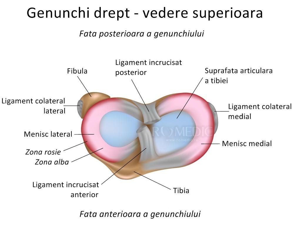 ce vindecă articulația genunchiului