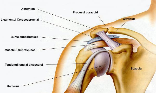 dureri articulare după fracturarea mâinii Vanga privind tratamentul artrozei