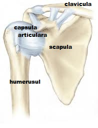 articulația umărului mâinii stângi doare