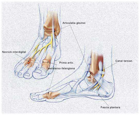 articulație dureroasă la picior
