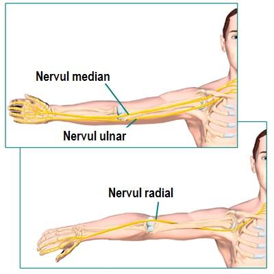 ce să facă articulațiile cotului doare dureri de umăr ce să facă