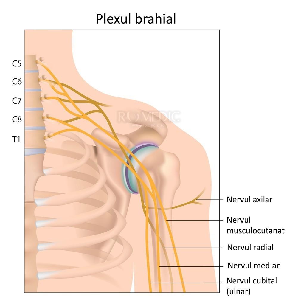 toți nervii și articulațiile doare articulațiile inghinale doare