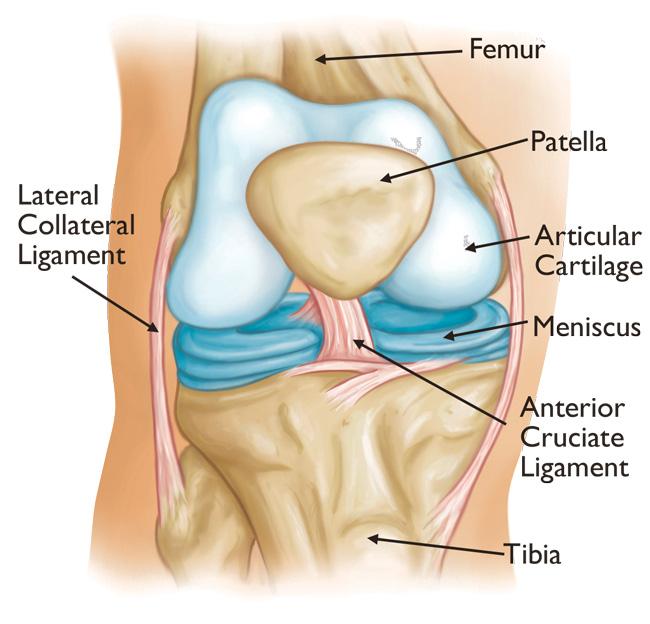 oris tratamentul spatelui și articulațiilor