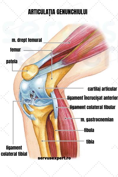 durere severă și umflare a articulației genunchiului
