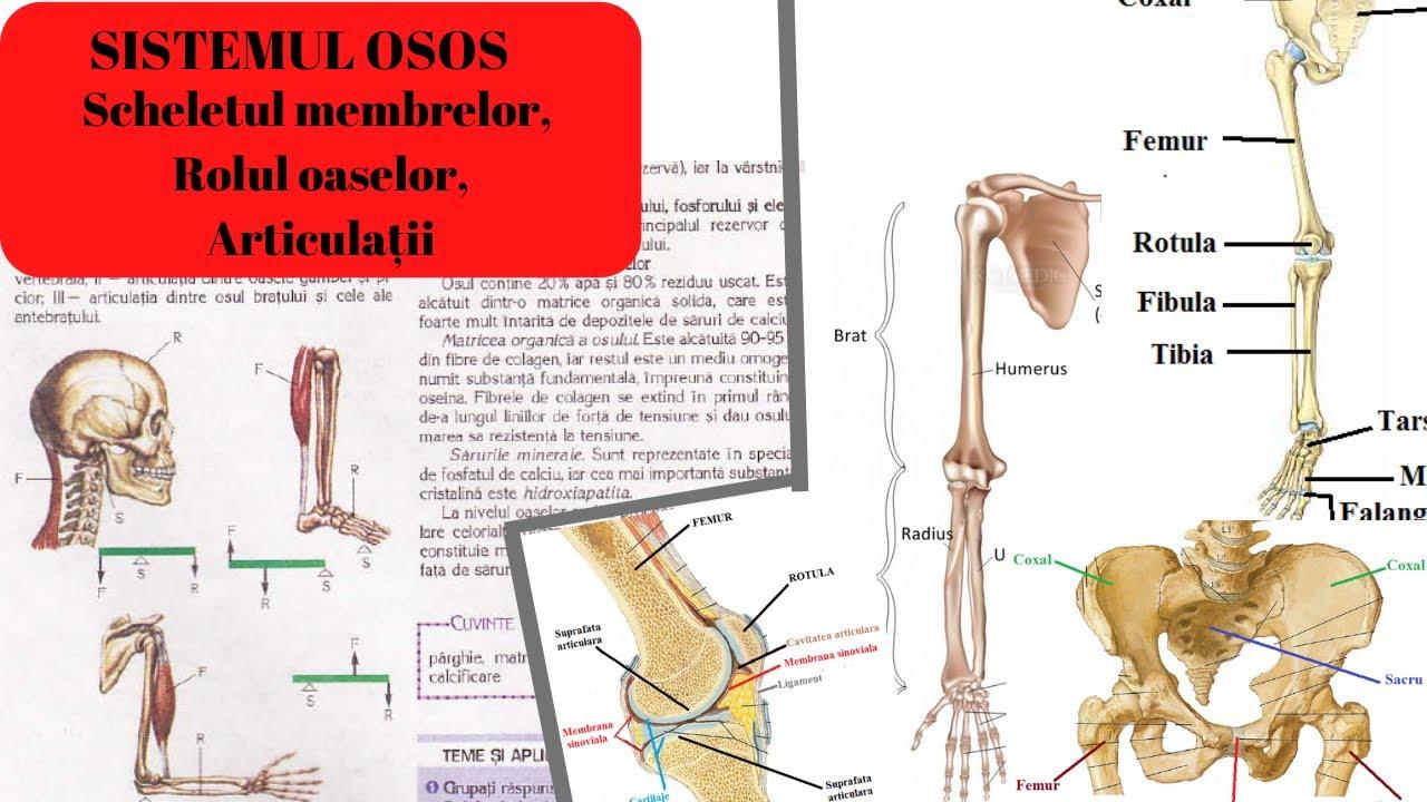 utilizarea caripazimului pentru artroza articulației genunchiului