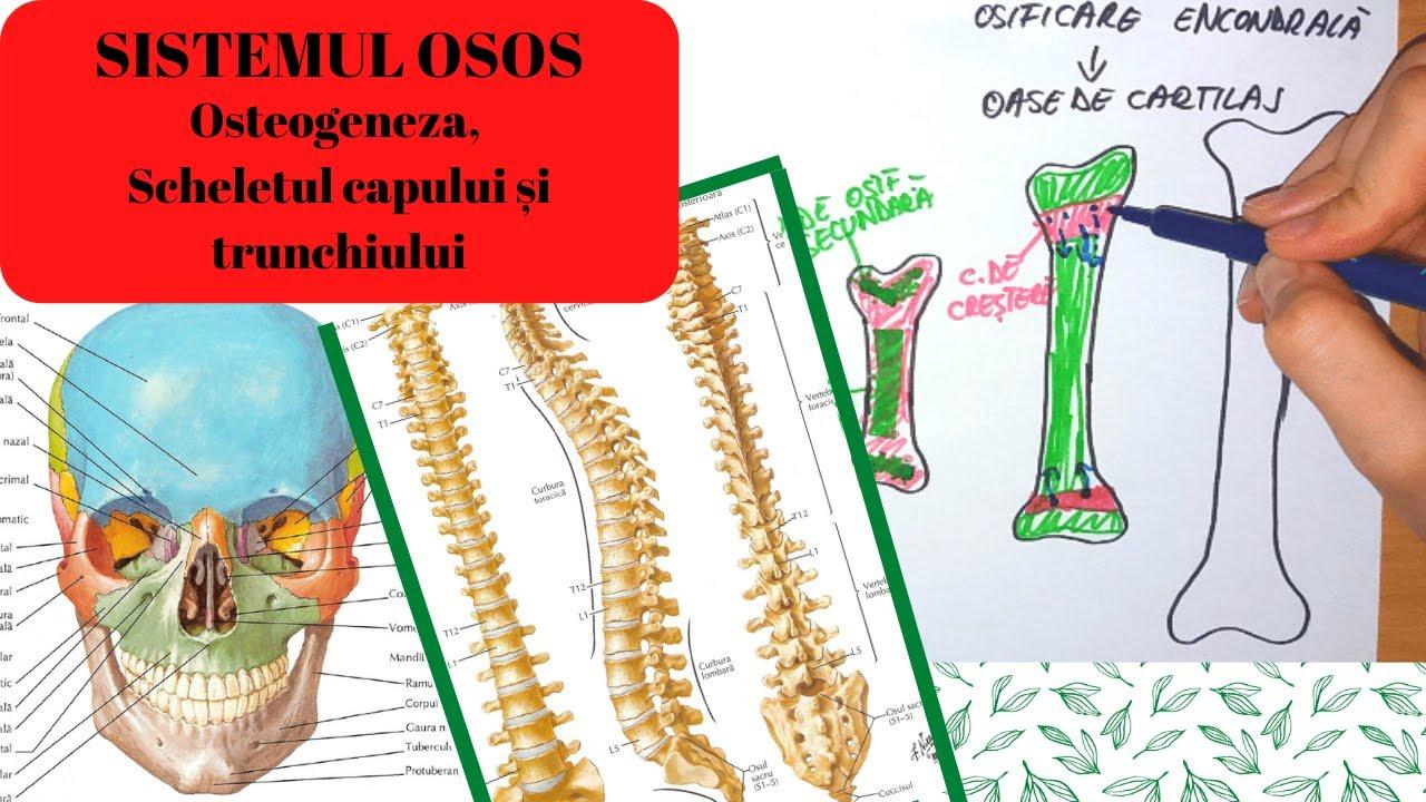 Cum se tratează erizipelele pe articulații. Totul despre erizipel: cauze, simptome, tratament