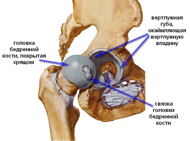 structura bolii articulației șoldului