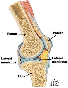 tipuri de leziuni ale articulației genunchiului preparate benefice pentru articulații