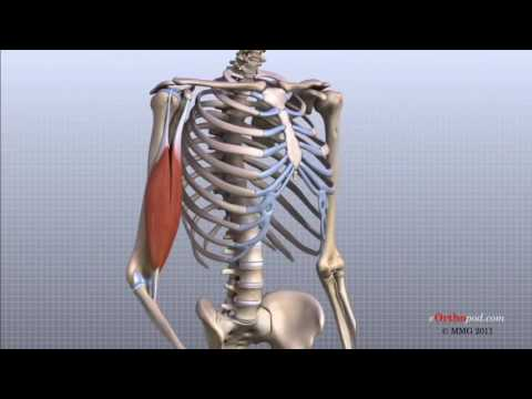 leziuni la genunchi