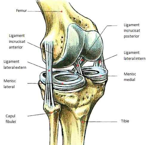 inflamația articulară la purcei cum să tratezi artrita și simptomele