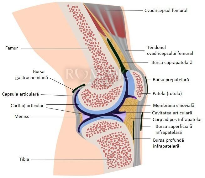 deteriorarea articulației genunchiului la sacul articulației