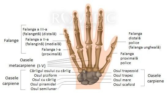 boala oaselor mâinilor remediu eficient pentru durerile articulare
