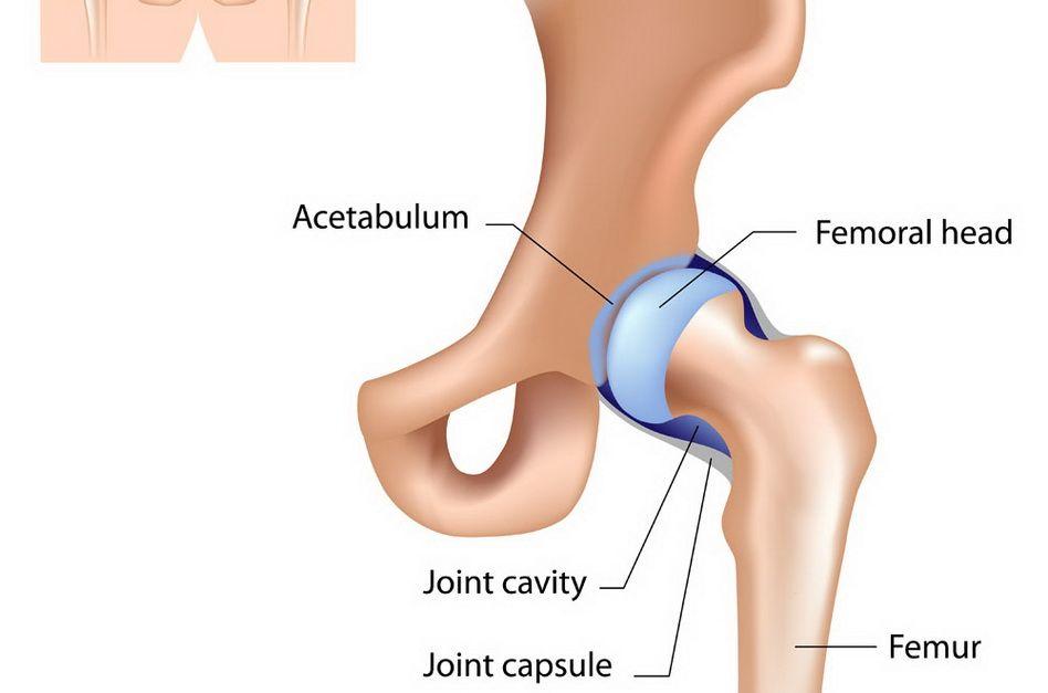 deteriorarea cartilajului șoldului articulațiile dureri ale corpului