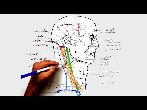 unguent ușor pentru picioarele articulațiilor și coloanei vertebrale