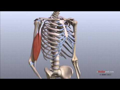 cât timp este tratată artroza umărului