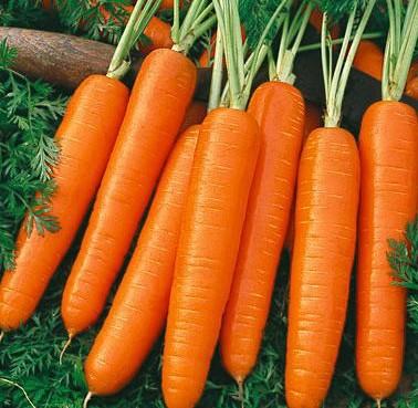morcovi în tratamentul articulațiilor din cauza ceea ce rănesc articulațiile din genunchi
