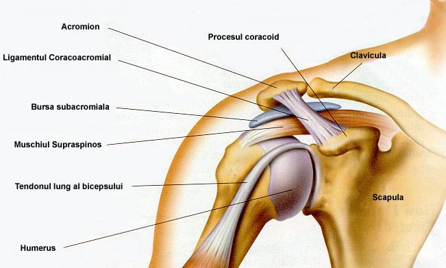 ce poate răni articulația umărului