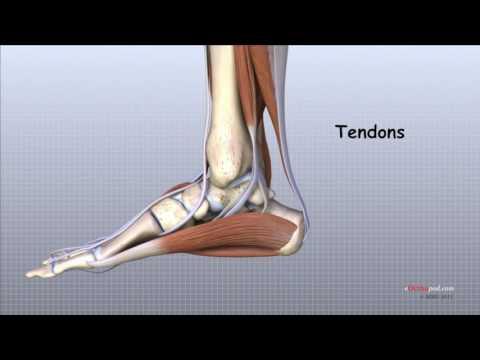 cum să elimini durerea din articulația gleznei remedii pentru tratamentul artrozei articulației umărului