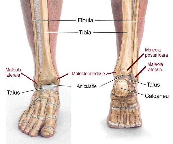 dureri la nivelul articulației gleznei piciorului unguent de artroză la șold