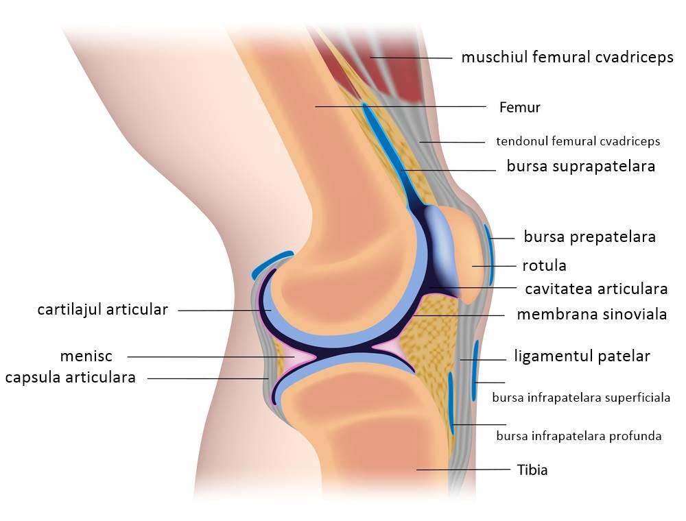 Preparate pentru repararea cartilajului genunchiului