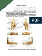 fizio cu artroza articulației cotului dureri de noapte în articulațiile tratamentului mâinilor
